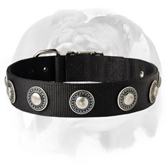 English Bulldog breed nylon collar with silver-like decorations