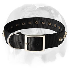 English Bulldog collar super durable