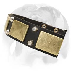 English Bulldog collar with rust-proof hardware