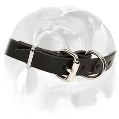English Bulldog stunning collar with D-ring