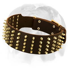 English Bulldog leather dog collar with brass spikes
