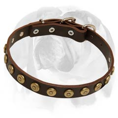 English Bulldog leather dog collar with dotted circles