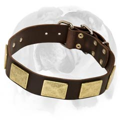 English Bulldog leather dog collar with massive plates