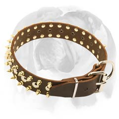 English Bulldog collar adorned with beautiful rust-proof spikes and studs