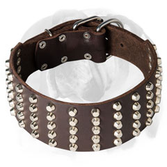 Handmade leather dog collar for English Bulldog