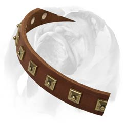 English Bulldog collar with rust-resistant D-ring and buckle