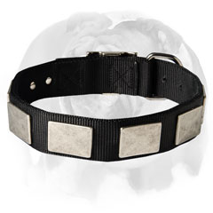 English Bulldog nylon dog collar with plates