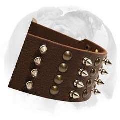 English Bulldog collar neatly decorated with beautiful rust-proof studs and spikes