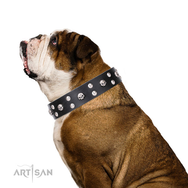 English Bulldog embellished full grain genuine leather dog collar for comfy wearing