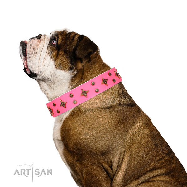 English Bulldog convenient genuine leather dog collar for everyday walking
