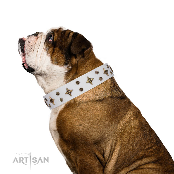English Bulldog adorned full grain leather dog collar for easy wearing