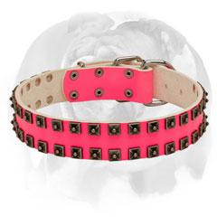 Handcrafted studs leather dog collar for English Bulldog