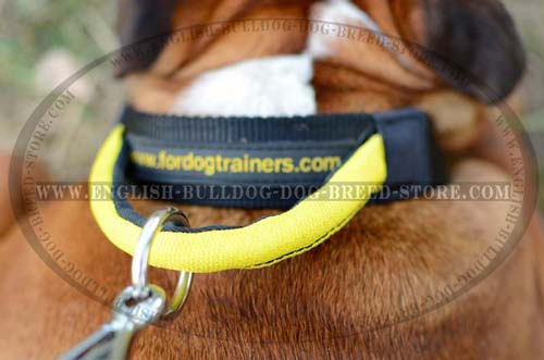 English Bulldog durable nylon collar