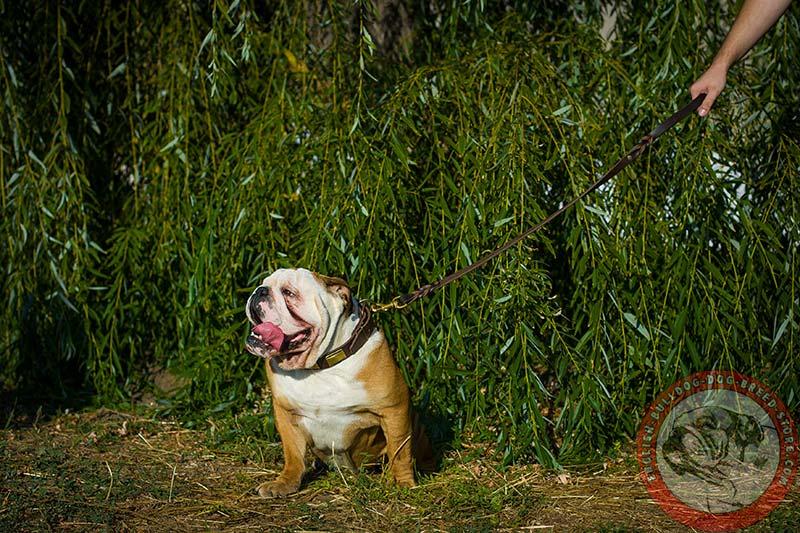English Bulldog Gorgeous Leather Dog Collar with Beautiful Brass ...
