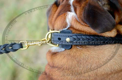 English Bulldog leather collar with solid D-ring
