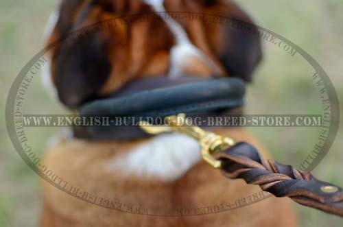 English Bulldog leather collar with grabbing handle