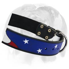 English Bulldog collar with nickel-plated hardware