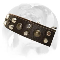 English Bulldog collar with studs and pyramids