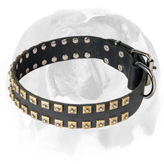 Pure leather English Bulldog collar for walking and training