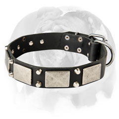 Fantastic English Bulldog Dog Collar