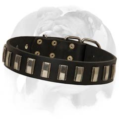 Leather Dog Collar specially for royal English Bulldog Breed