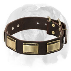 Leather dog collar for English Bulldog breed with nickel plates and D-ring