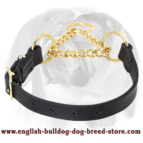 Martingale Dog Collar for English Bulldog Training