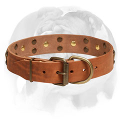 Leather Dog Collar English Bulldog with Brass Hardware