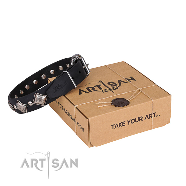 Casual leather dog collar with fashionable embellishments