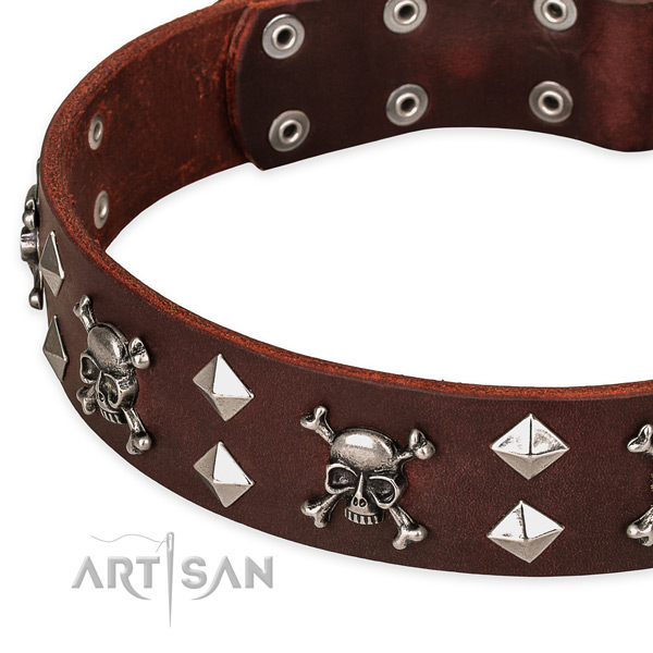 Day-to-day leather dog collar for stylish walks