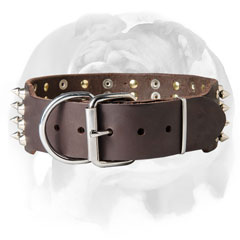 Fashionable leather English Bulldog collar for walking and basic training