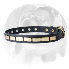 Leather dog collar for English Bulldog breed with decor