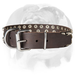 Pure leather English Bulldog collar for walking and basic training