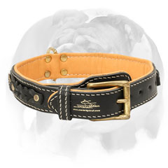 Nappa padded leather dog collar for English Bulldog