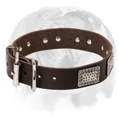 Leather fancy English Bulldog collar
