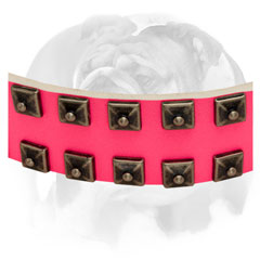 Leather English Bulldog collar decorated with brass studs