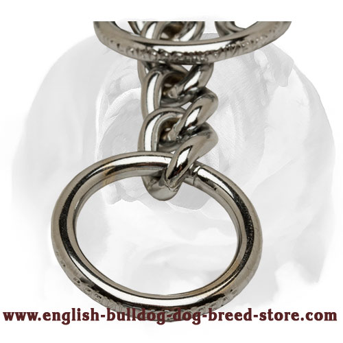 English Bulldog collar with O-rings for behavior correction
