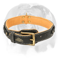 Genuine leather English Bulldog collar with rivets and braids
