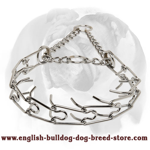 Chrome Plated Dog Collar for English Bulldog