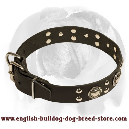 English Bulldog strong leather dog collar