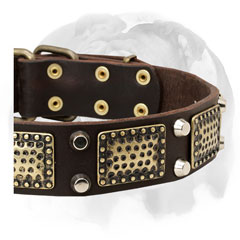 Elegant full grain leather English Bulldog collar