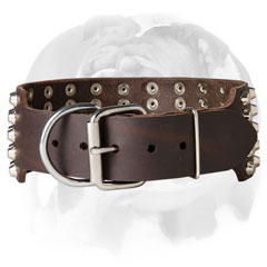 Leather English Bulldog collar with buckle