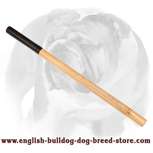English Bulldog firm stick for bite training
