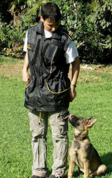 English Bulldog Dog Training Vest-Dog Trainer Supplies