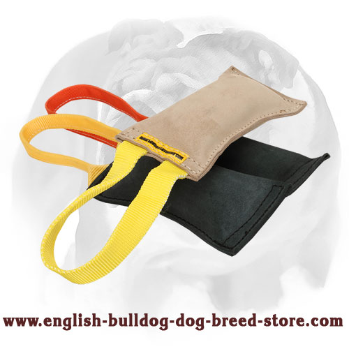 Healthy bite tug for training English Bulldog puppies and young dogs