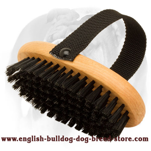 Wooden Bristle Brush for English Bulldog