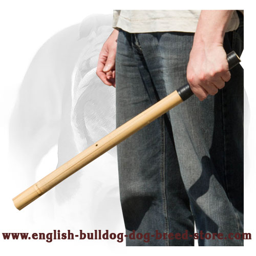 Make noise with Bamboo stick for training English Bulldog
