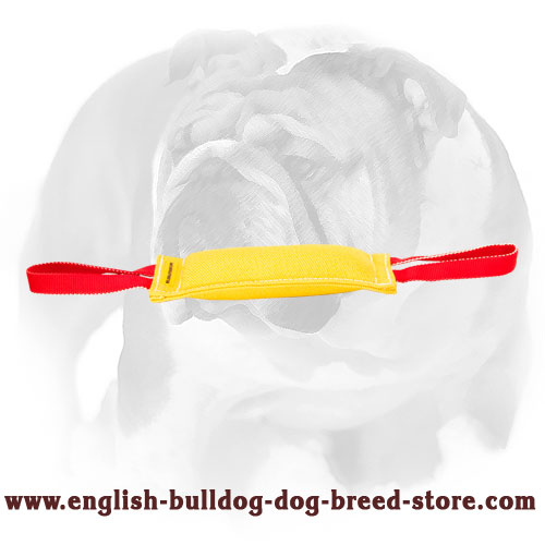 English Bulldog French linen bite tug for training puppies
