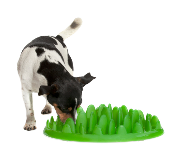 Plastic feeder for English Bulldog breed