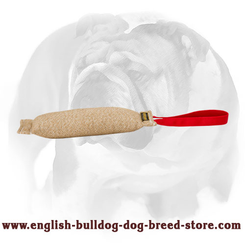 English Bulldog healthy Jute puppy tug for bite training